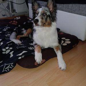 Cooper (5 Monate)