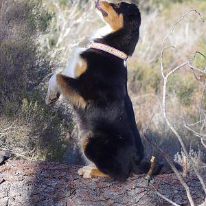 Männchen auf dem Baumstamm klappt und frech kann man nebenbei auch noch sein ;)