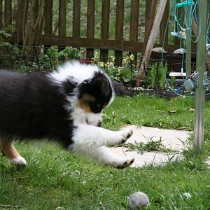 Bella 11 Wochen. Ihre ersten Tage bei uns zu Hause