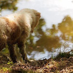 16.09.2012 Sam ist noch am Überlegen ob er in den See springen soll oder nicht, entschied sich dann am Ufer durch den Matsch zu flitzen :)