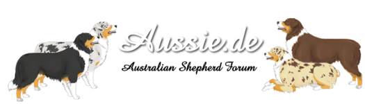 Aussie.de - Australian Shepherd Forum