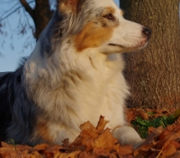 Anne Snowflake of Bunte Hunde
