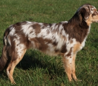 spotted-tails-cicely-6mo-h