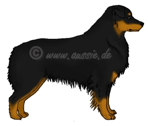 At-Locus-black-and-tan-points-tanmarkings-black-bi-copper