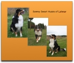 Sammy Sweet Aussie of Lohmar2