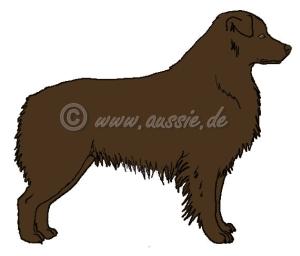 b-locus-braun-red-aussie-solid-bb-brown