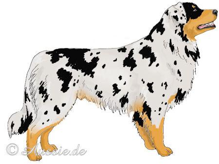 Farben Australian Shepherd Aussie De