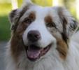 los perros locos affectionate companion