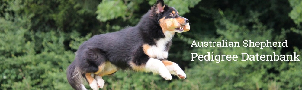 Australian Shepherd Pedigree Datenbank