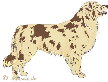 self red merle einfarbig solid