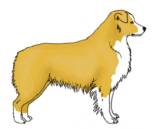 yellow gelb Shepherd